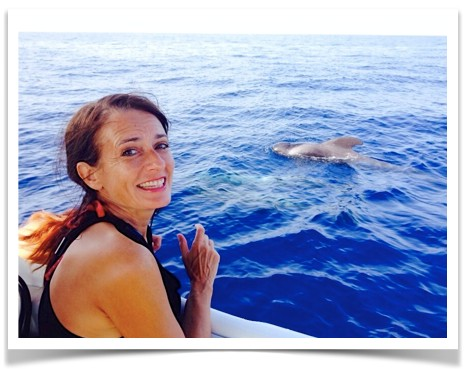 HeleneScherrer-dauphins